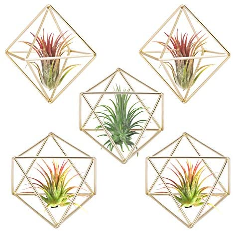 VIVOSUN 5-Pack Air Plant Holder, Modern Geometric Metal Planter Himmeli Decor